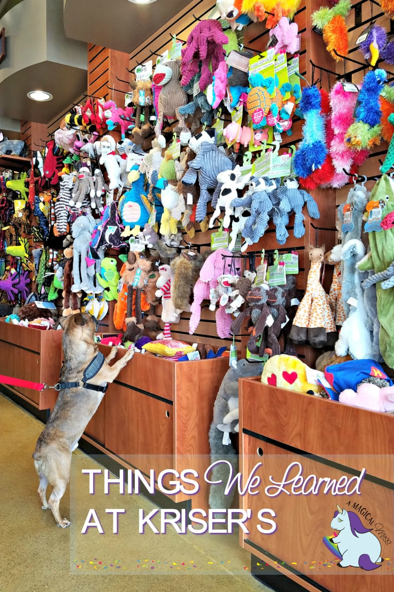 Walls of Toys at Kriser's pet store. Treat your pet with a huge variety of fun toys.