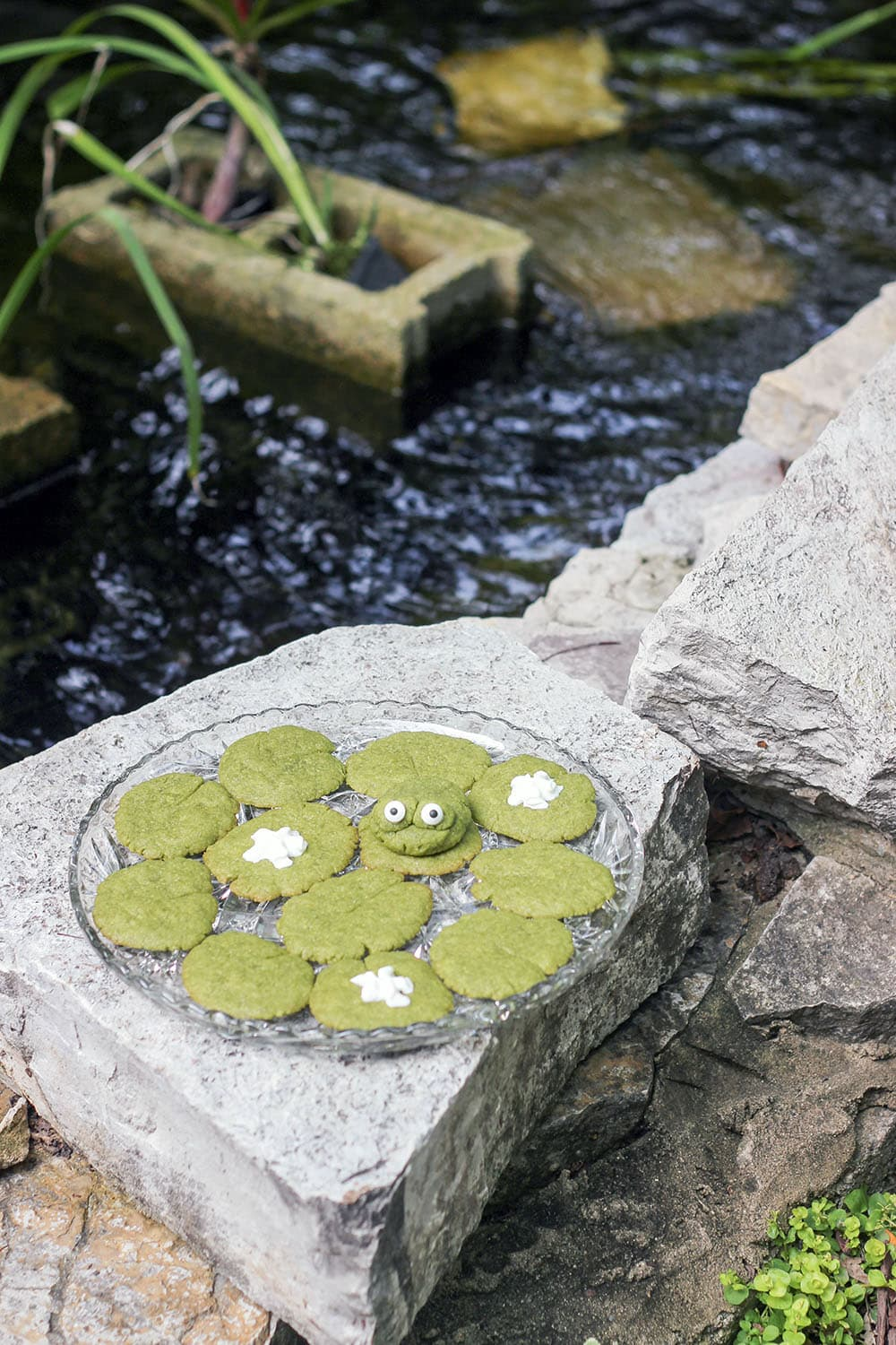 Lily pad cookies next to a real pond