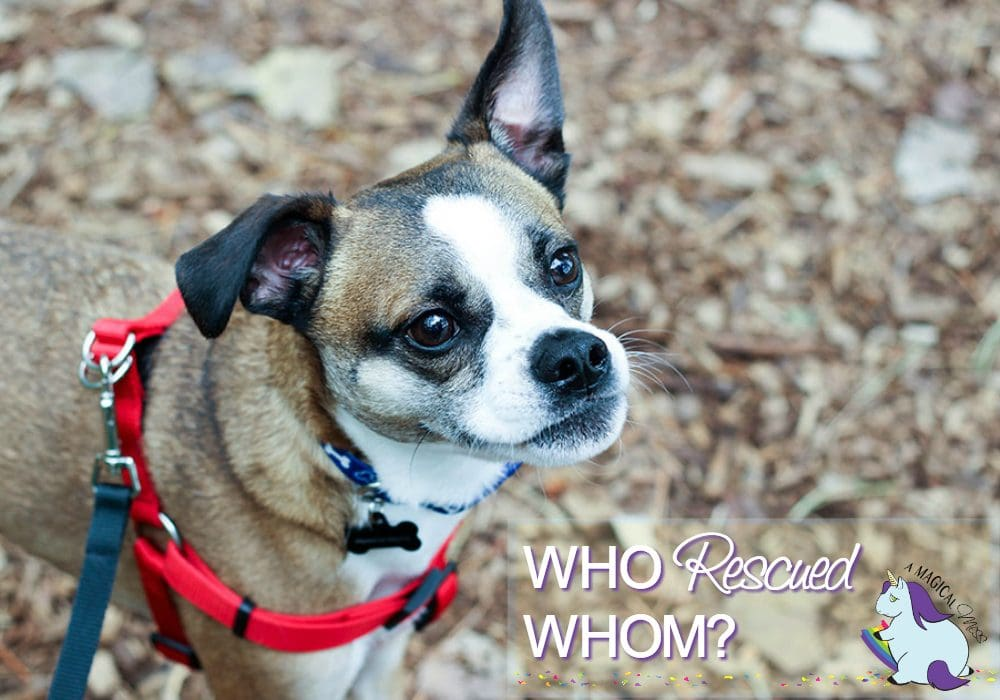 5 Ways My Rescue Dogs Rescue me Right Back - Who rescued Whom?