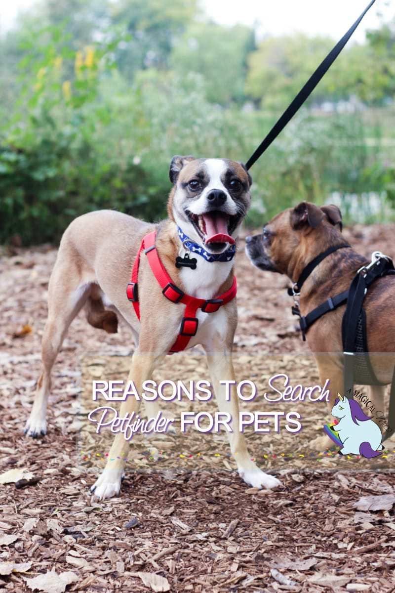 Reasons to search Petfinder for your next pet