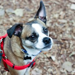 5 Ways My Rescue Dogs Rescue me Right Back