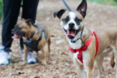 Reasons to Choose Pet Adoption Online Sites