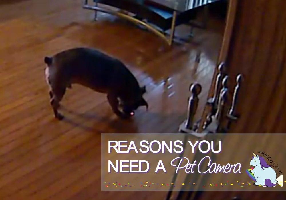 5 Reasons you Need an Interactive Pet Camera