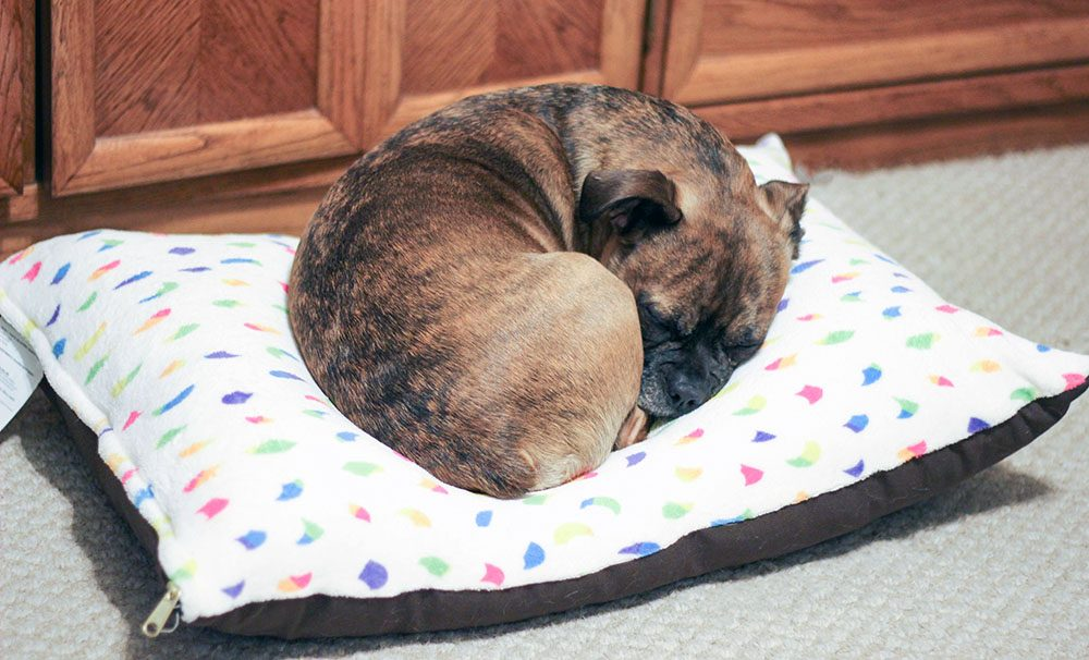 The Grump cozied up on his pet bed from Zazzle