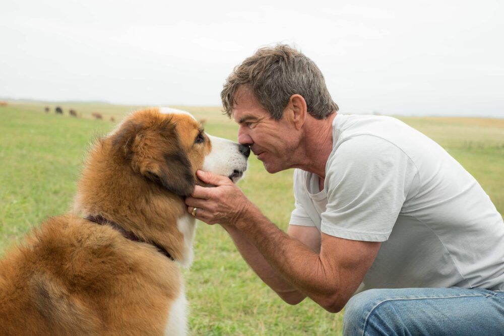 Dennis Quaid in A Dog's Purpose