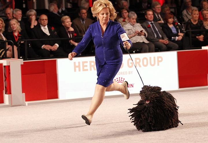 Royal Canin Dog Show Puli