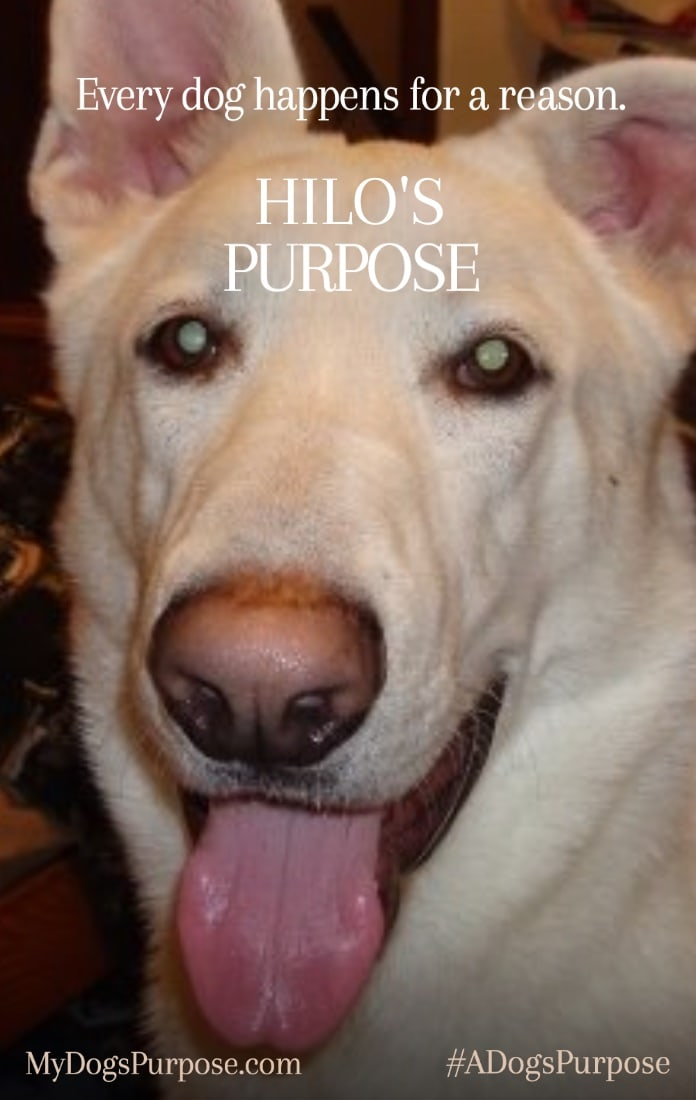 A Dog's Purpose Movie - Hilo's Purpose
