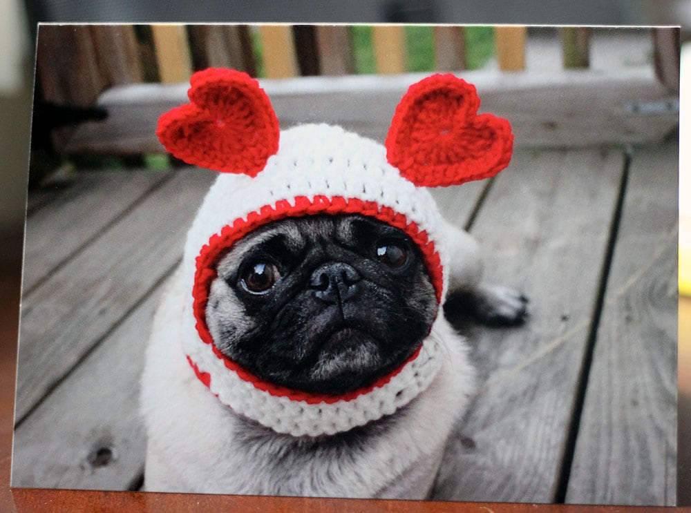 Cute Pug Dog Valentine's Day Card