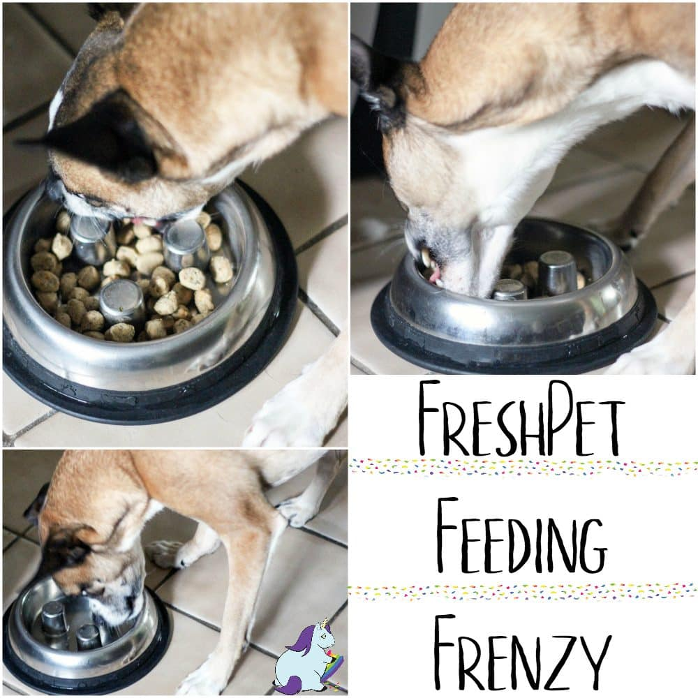 Fresh Dog Food Creates a Feasting Frenzy