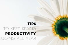 Don't Fall Back, Spring Ahead - Tips for Staying on a Productive Track