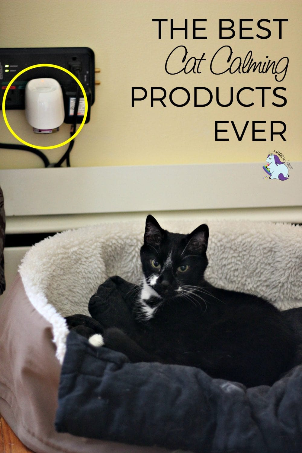 The Best Cat Calming Products Behind My Happy Cat