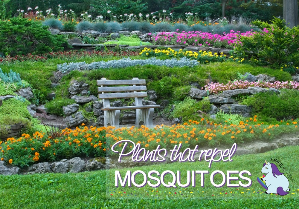17 Plants That Repel Mosquitoes While Beautifying Your Yard A