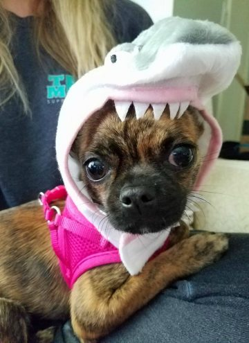 Bea with a Shark hat on