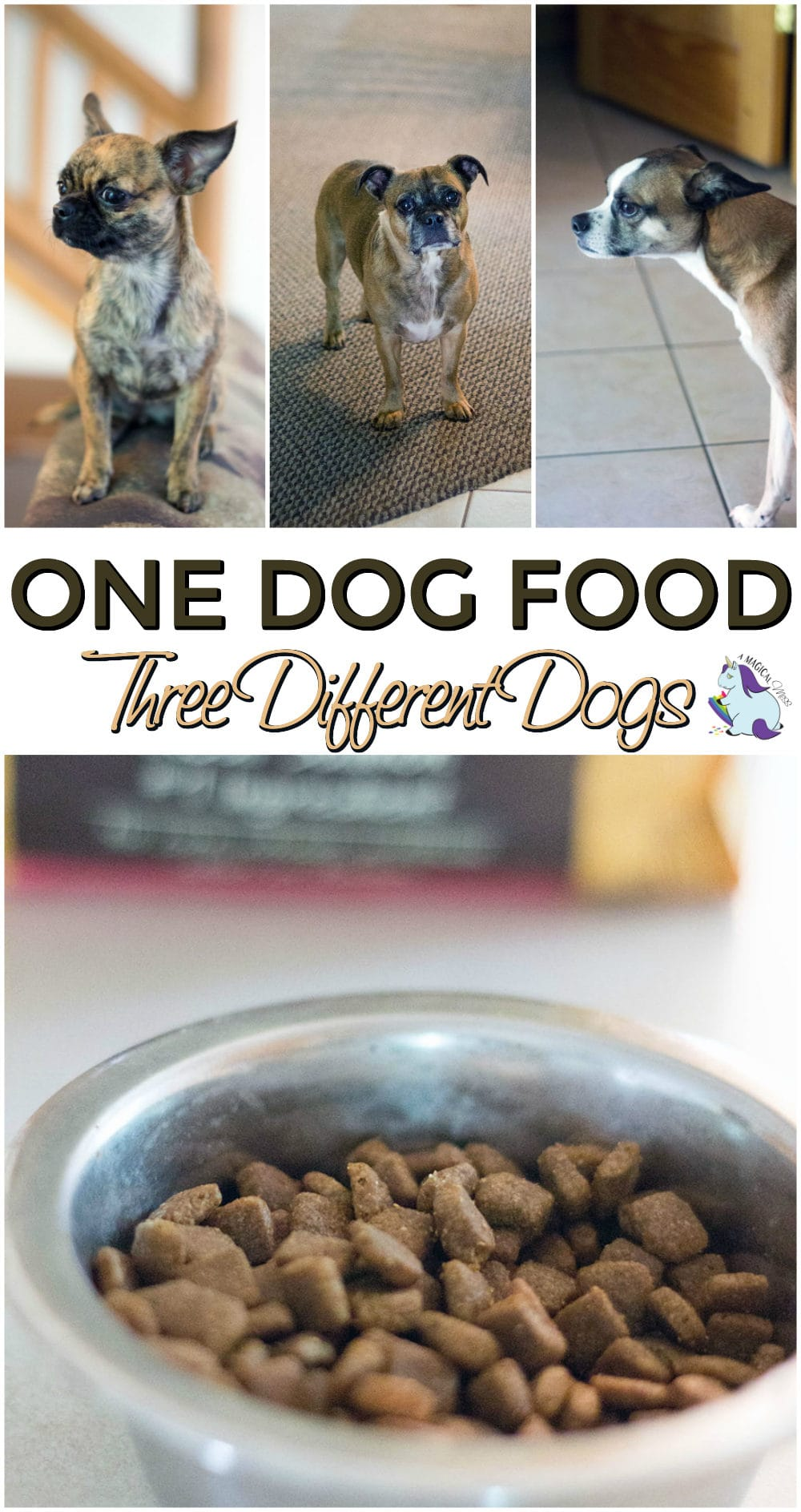 Easy to Find Healthy Dog Foods for Multiple Dogs