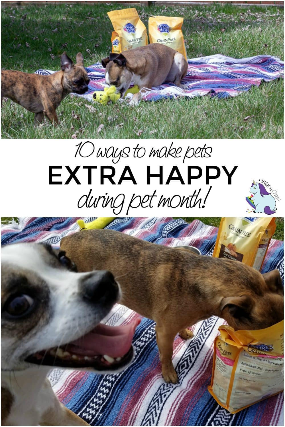 10 Ways to Make Dogs Happy During Pet Month