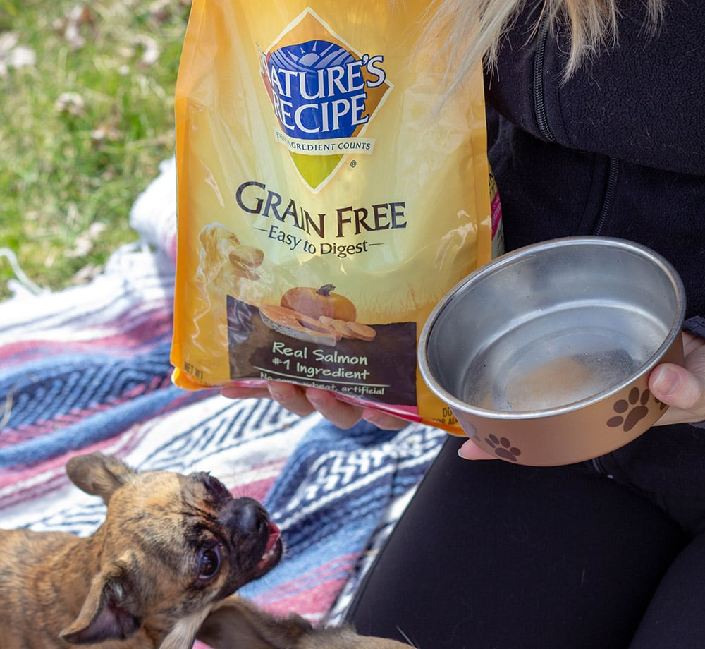 Pet picnic