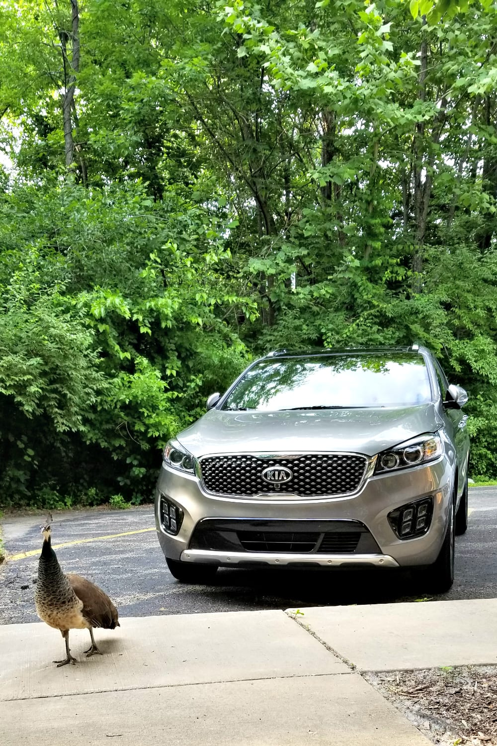 17 Irresistible Features in the 2018 Kia Sorento #cars #vehicles #kia #roadtrip