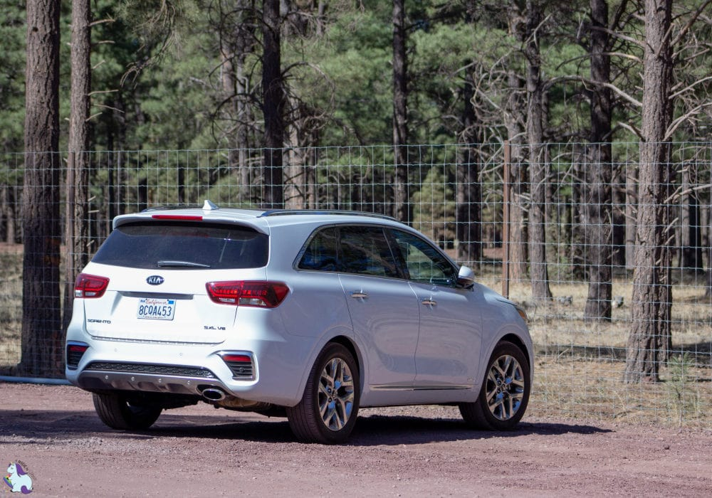 The 2019 Kia Sorento in Bearizona