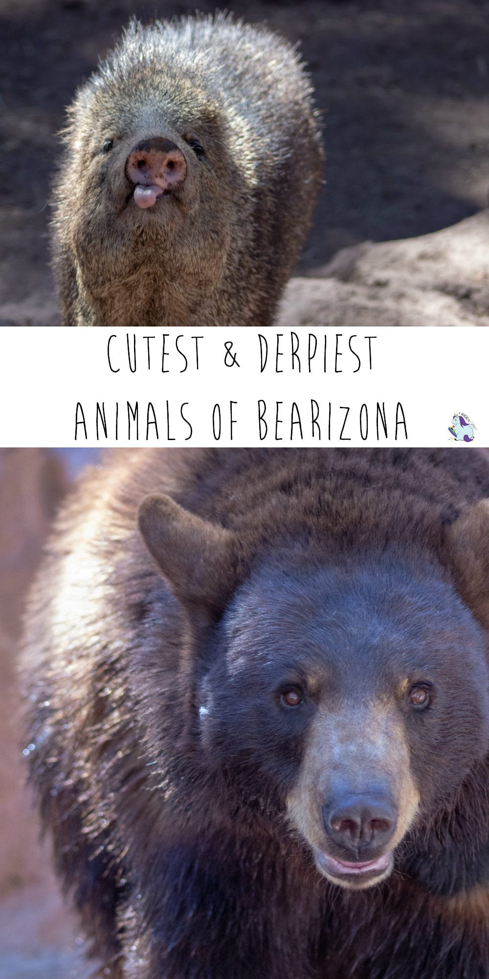 A whole post with photos of all the cutest and derpiest animals in Bearizona