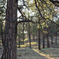 Hiking trail at Little America Flagstaff