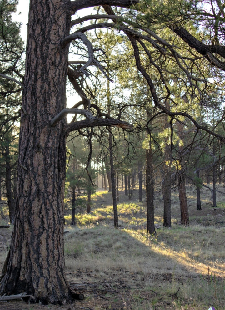 Hiking trail at Little America Flagstaff
