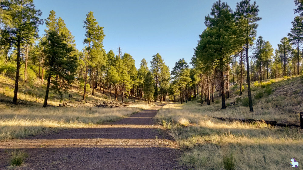Ponderosa forest trail is awesome for an early morning walk