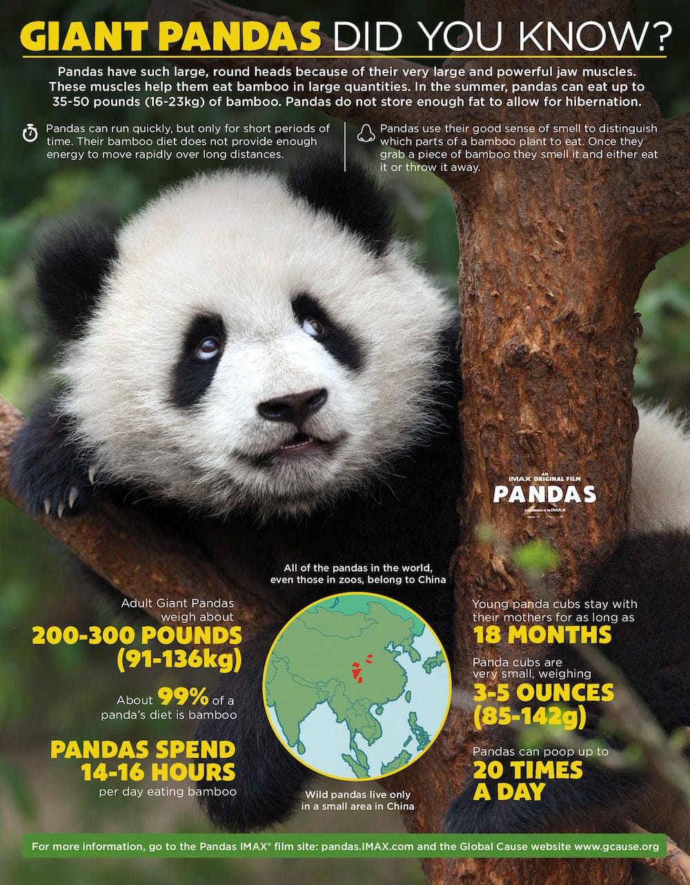 PANDAS movie panda bear facts