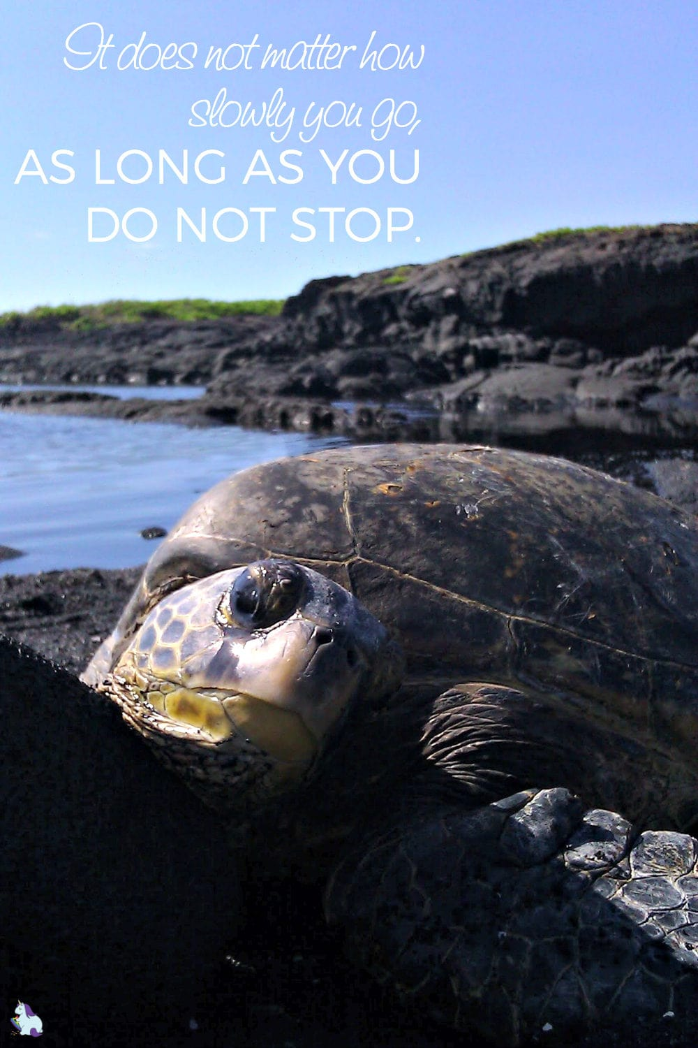 Sea Turtle Wisdom: Never give up. Just Keep Swimming.