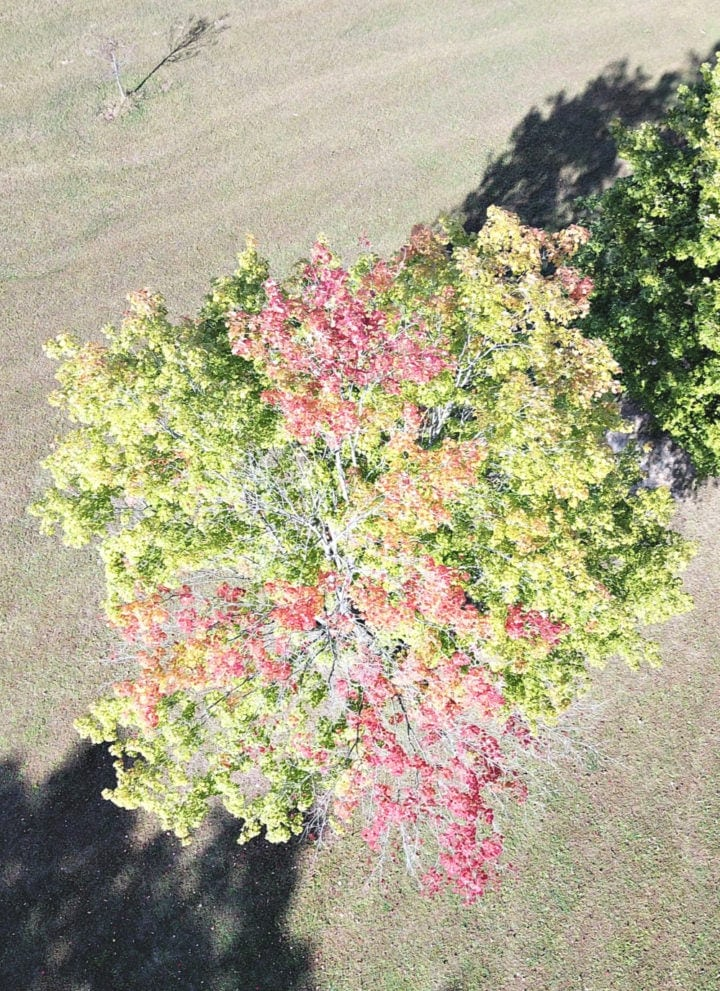 Drone shot of fall leaves