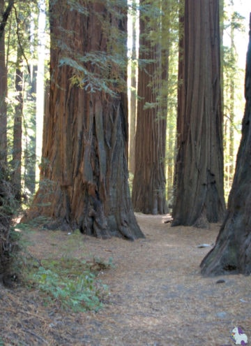 5 Magical Bucket List Ideas in the US - Redwood forest