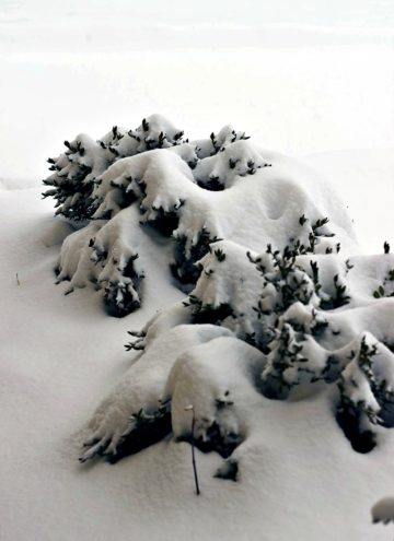 Snow isn't white; it's translucent?!