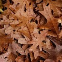 Fall leaves after fresh rain