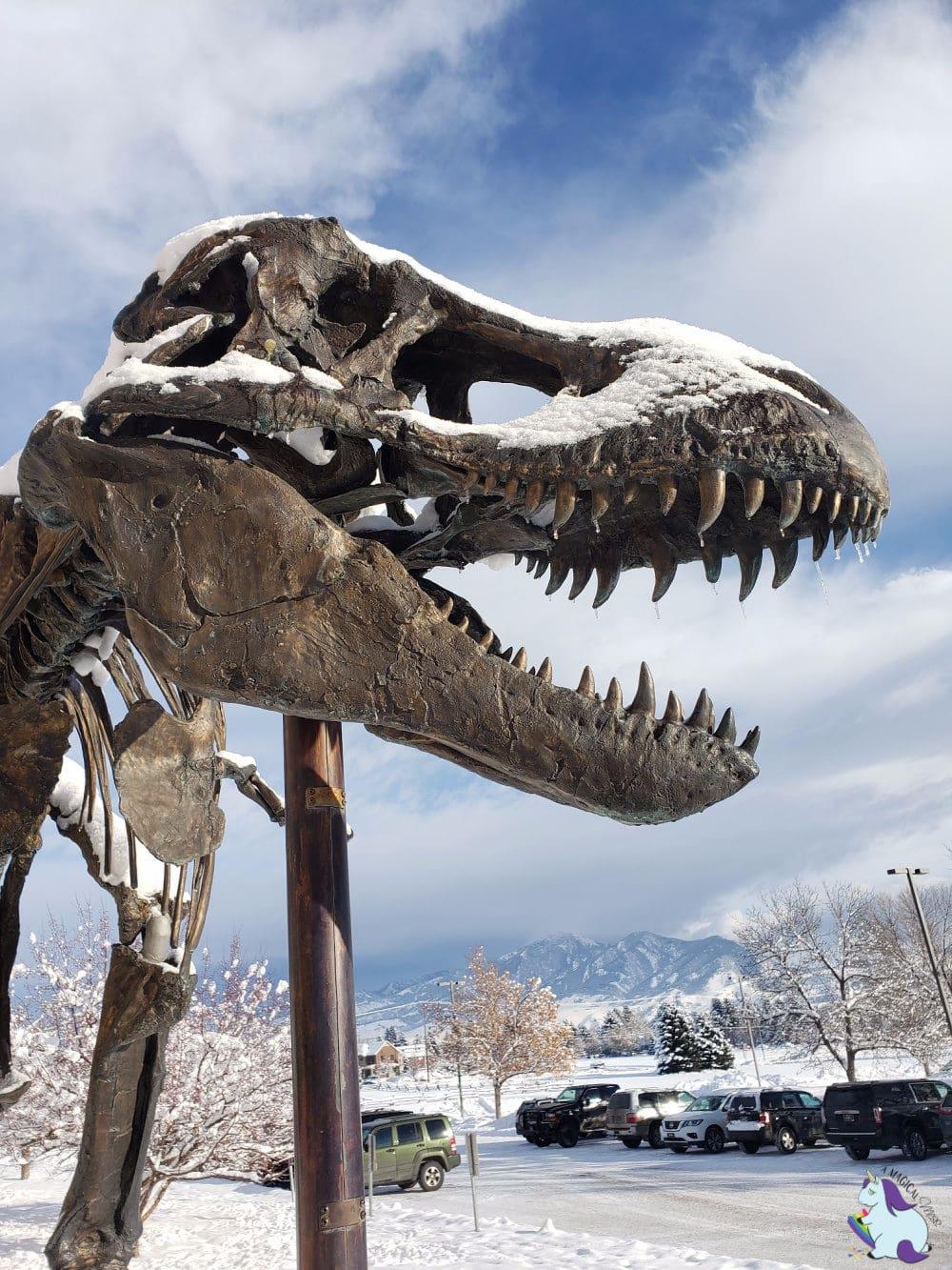 T Rex skeleton at Museum of the Rockies