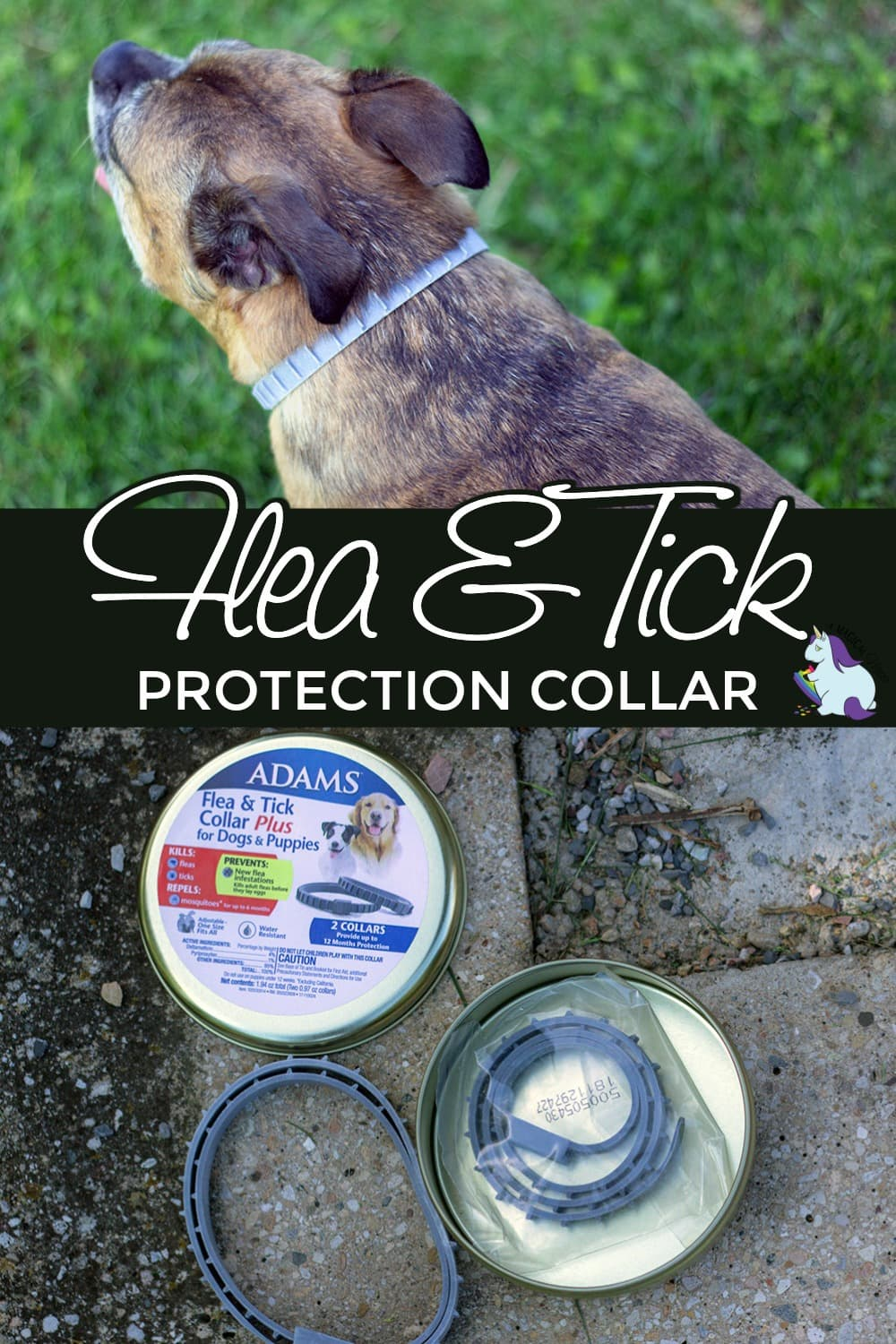 Dog wearing Adams Flea and Tick Collar