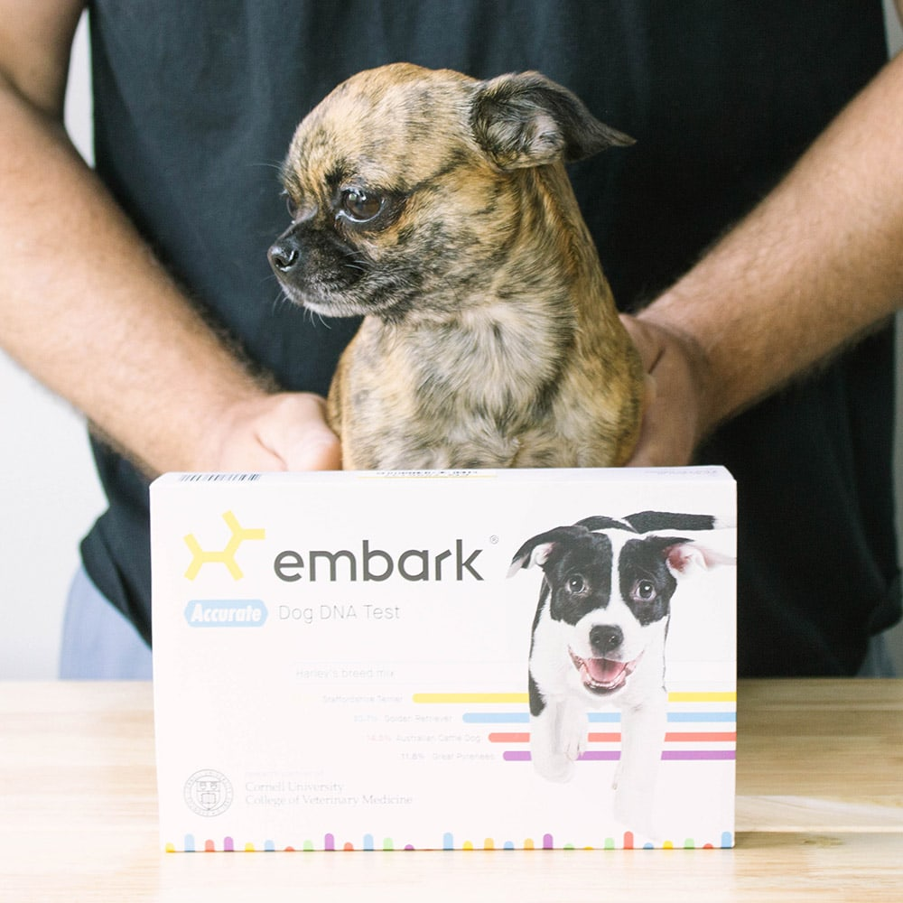 Little chihuahua mix sitting behind an Embark dog DNA kit