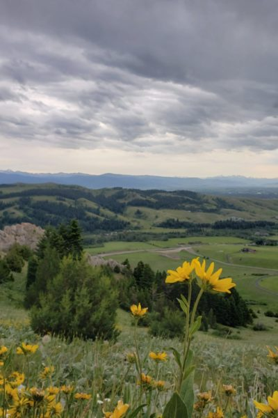 Yellow flowers with mountains and clouds in background