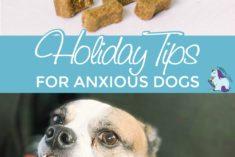 Calming dog treats and smiling dog